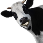 idf-idealfurniture-smiling-cow
